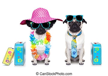 couple of dogs - couple of pug dog ready to depart for...