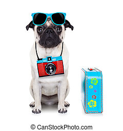 dog photographer - pug dog looking so cool with fancy...