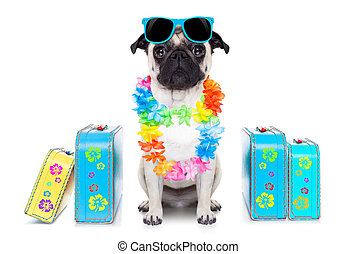 dog summer vacation - pug dog looking so cool with fancy...