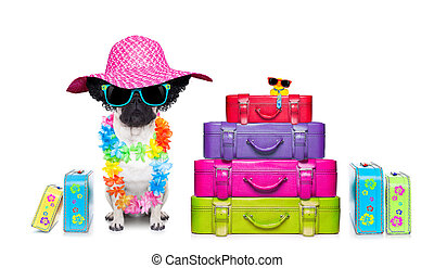 diva dog vacation - diva pug dog with stack of luggage for...