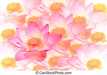 Abstract background of lotus flower