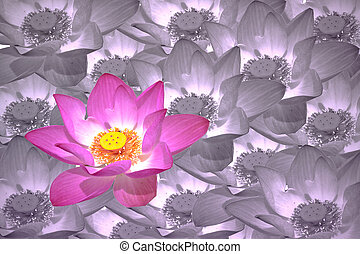 abstract background of lotus flowers