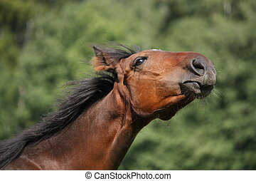 Happy brown foal portrait - Happy brown foal stretching its...