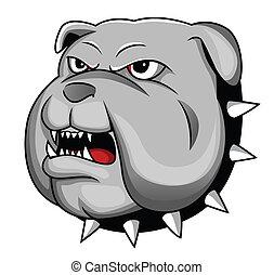 bulldogge, kopf