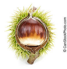 Isolated chestnut - Studio isolated shiny chestnut in its...