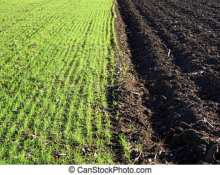 Cornfield in Italy - Newly ploughed cornfield in Italy, half...