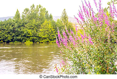 Flowers in the river - Selective focus of some flowers in...