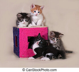 Little kittens sitting on and around scratching posts on...