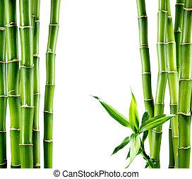 ramas, bambú, tabla