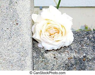 fleur jaune sur un mur