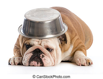 hungry dog - english bulldog laying down with dog bowl on...