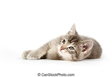 Gray kitten laying down and looking up - A gray kitten...