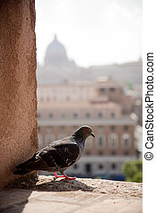 Pigeon resting with Vatican in the background Rome, Italy -...