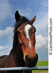 Beautiful brown horse - Portrait of a Beautiful brown horse