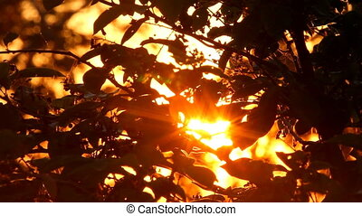 sunset in foliage on the sea shore shouts of seagulls - red...