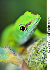 cute green gecko - Close up of a cute green gecko