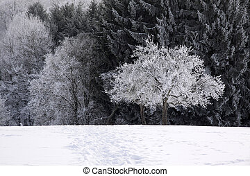 Snow covered wintry forest at Engenhahn in the Taunus...