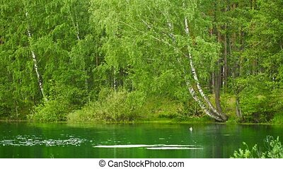 Forest lake in central Russia - Video UHD - Forest lake in...