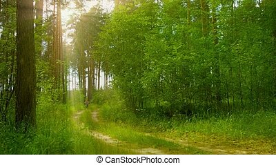 Cheerful little girl rides a bicycle on the solar pine forest