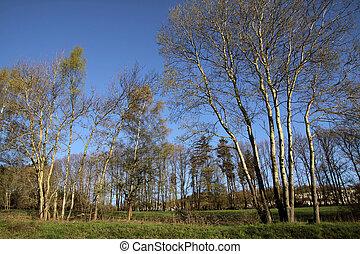 Spring trees in the Taunus mountains near Engenhahn, Hesse,...