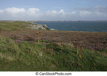 Porth Ruffydd - A view from clifftop vegetation at Porth...