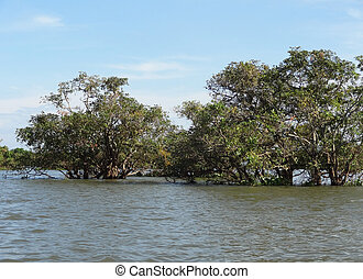 around Tonle Sap - waterside flood scenery with trees at the...