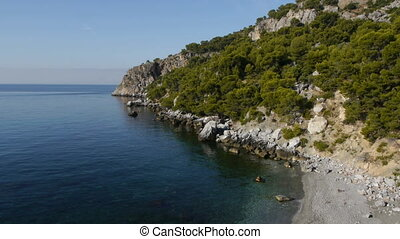 calm sea with pine trees to the water