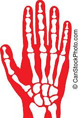 human skeleton hand, vector human hand bones