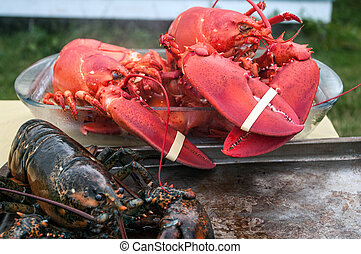 Live and Cooked Lobster on Grand Manan New Brunswick
