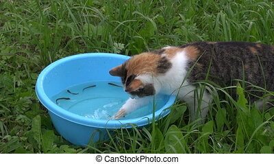 hungry cat catch fish - Hungry cat catch fishes from blue...