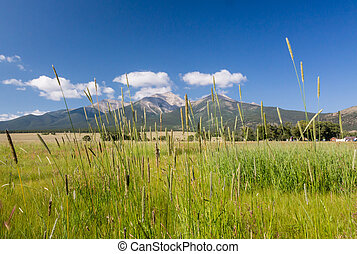 Farmyard and grasses by Mt Princeton CO - Grasses and...
