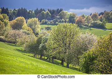 Spring trees in the Taunus mountains near Engenhahn, Hesse,...