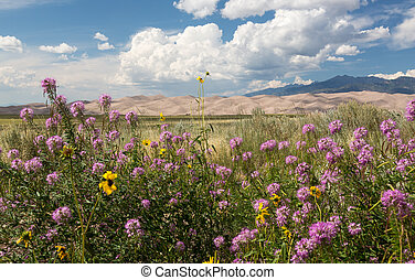 Panorama of Great Sand Dunes NP - Wildflowers frame a view...