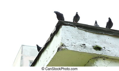 View of pigeons sitting on building's roof