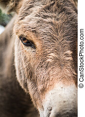 Donkey head - close-up