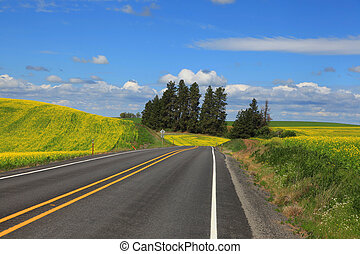 Scenic byway in Palouse - Scenic road through Palouse county...