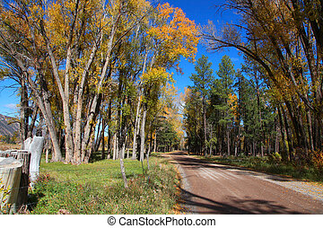 Rural drive through colorful trees in autumn time