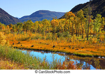 Autumn in Colorado - Colorful aspen trees by Gunnison river...