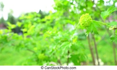 Green bush branch on garden background