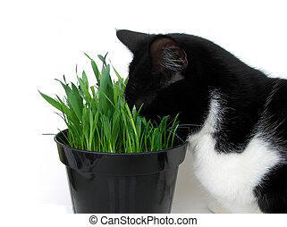 Catdiction 1 - Addicted cat plunging its head in a vase of...