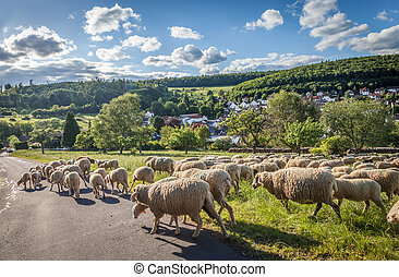 Flock Of Sheep in the Taunus mountains near Engenhahn,...