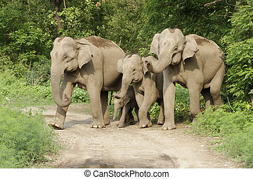 Asian elephant family with small calf