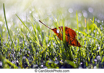 first summer end falling apple tree leaf in dewy grass -...