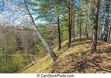 Spring forest on a sunny day