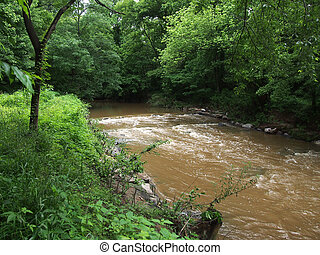 Dirty Stream flows quickly through the Forest in Rock Creek...