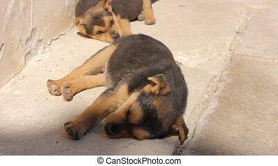 cute little dog puppy lying