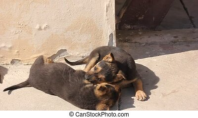 cute little dogs puppies playing