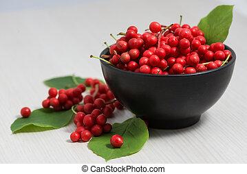 Schisandra, chinensis, fruta, bayas