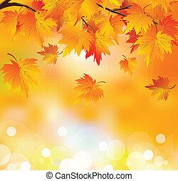 automne, arbre, branche