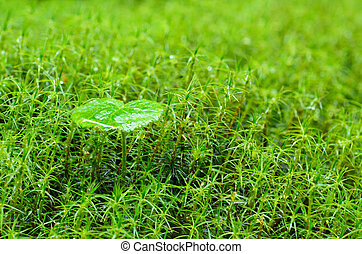 Green moss macro natural background with leaf